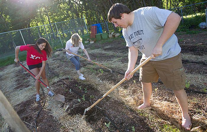 Students work in campus garden