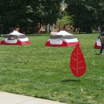 Red Leaf on Lawn with Tents