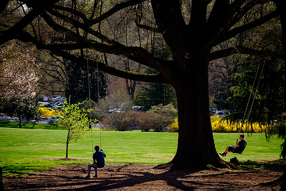 Wake Forest students enjoy a warm spring afternoon on the swings on Davis Field on Thursday, March 17, 2016.